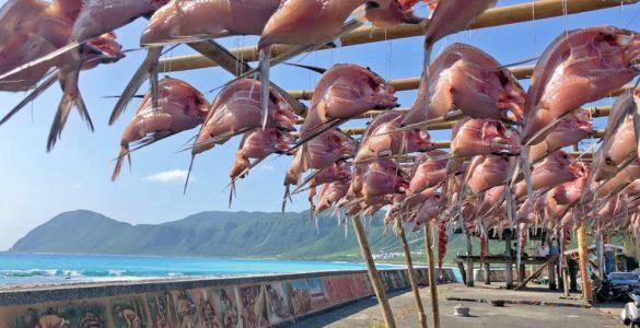 蘭嶼飛魚季