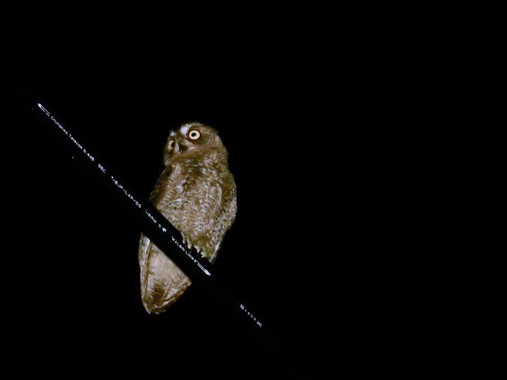 蘭嶼生態夜間觀察